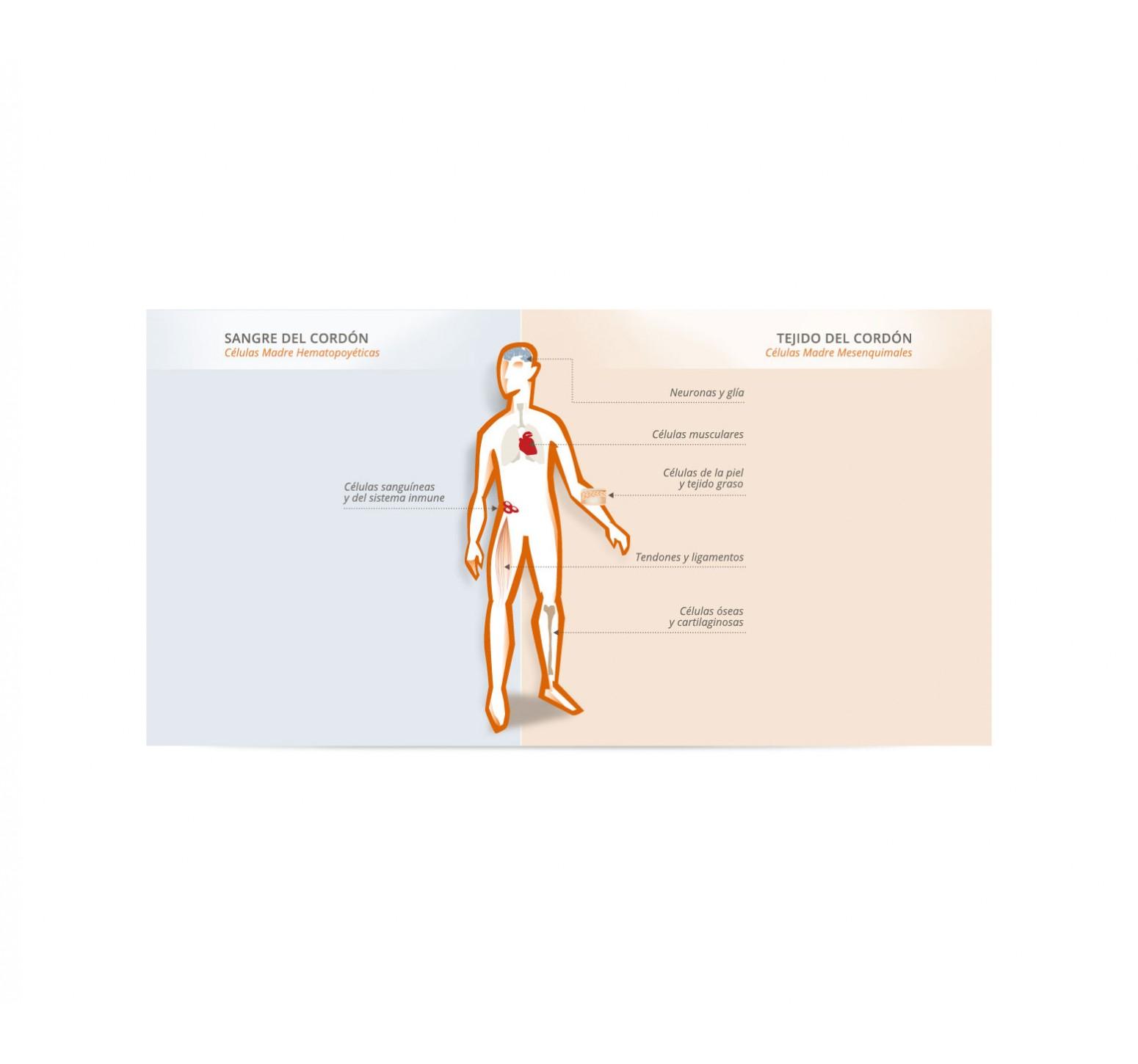 Protectia Banco de Células Madre (Primera muestra)